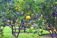 Giardino arancione fotografia stock libera da diritti