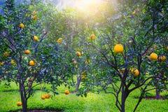 Giardino arancione fotografie stock libere da diritti