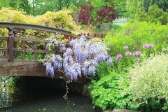 Giardino bello della sorgente Immagini Stock