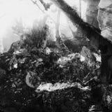 Giardino in bianco e nero fotografie stock