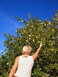 giardino biondo attraente Immagini Stock Libere da Diritti