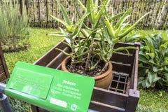 Giardino botanico Immagini Stock Libere da Diritti