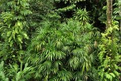 Giardino botanico Fotografia Stock Libera da Diritti