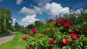 Giardino botanico stock footage