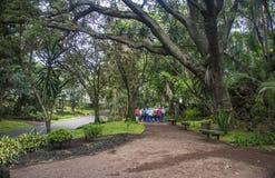Giardino botanico Antonio Borges, Ponta Delgada, Azzorre, Portogallo immagini stock