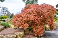 Giardino botanico di Kew in primavera, Londra, Regno Unito immagini stock libere da diritti