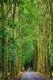 Giardino botanico di Purwodadi, Pasuruan, Indonesia Fotografia Stock Libera da Diritti