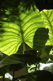 Giardino botanico di San Francisco Fotografie Stock