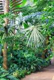 Giardino botanico interno Fotografia Stock