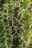 Giardino botanico IV Fotografie Stock