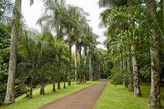 Giardino botanico, Mauritius Fotografia Stock
