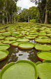 Giardino botanico, Mauritius Immagine Stock