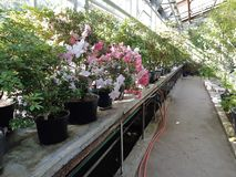 Giardino botanico a Mosca fotografia stock libera da diritti