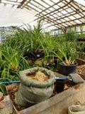 Giardino botanico a Mosca immagini stock