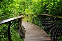 Giardino botanico nazionale di Kirstenbosch Immagini Stock Libere da Diritti