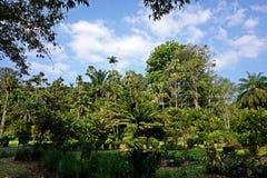 Giardino botanico nello Sri Lanka Candy Fotografia Stock