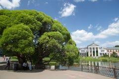 Giardino botanico principale a Mosca fotografia stock libera da diritti