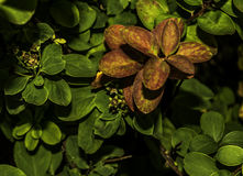Giardino botanico Reykjavik Fotografie Stock Libere da Diritti