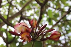 Giardino botanico Seychelles, Africa Immagini Stock