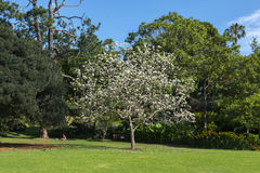 Giardino botanico Sydney Fotografie Stock Libere da Diritti