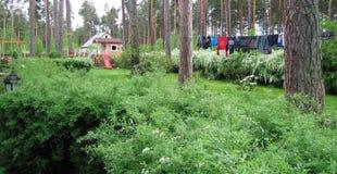 Giardino, cespugli verdi Vestiti bagnati fotografia stock