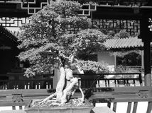 Giardino cinese Immagine Stock Libera da Diritti