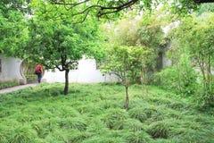 Giardino cinese Cespugli verdi Fotografie Stock