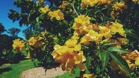 Giardino cinese di Nowra, Australia Fotografia Stock