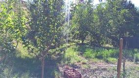 Giardino con gli alberi da frutto Fotografia Stock Libera da Diritti