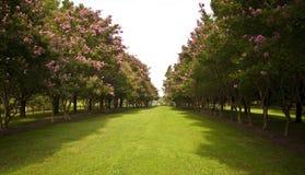 Giardino con gli alberi dai lati fotografia stock