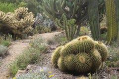 Giardino con i cactus Fotografie Stock Libere da Diritti