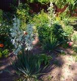 Giardino con i fiori casalinghi vicino agli alberi da frutto immagine stock