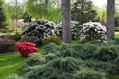 Giardino con i fiori e gli arbusti Fotografia Stock