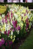 Giardino con i fiori variopinti Fotografia Stock Libera da Diritti