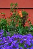Giardino con i tulipani Fotografia Stock Libera da Diritti
