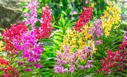 Giardino con le orchidee variopinte nel sole di primavera Fotografia Stock Libera da Diritti