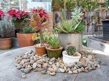 Giardino con le piccole piante Immagini Stock