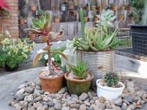 Giardino con le piccole piante Immagini Stock Libere da Diritti