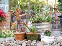 Giardino con le piccole piante Fotografia Stock
