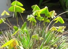 Giardino conservato in vaso Immagine Stock