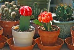 Giardino conservato in vaso del cactus di un su un passaggio pedonale livello tri della costruzione del condominio, Fotografie Stock Libere da Diritti