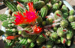Giardino conservato in vaso del cactus di un su un passaggio pedonale livello tri della costruzione del condominio, Fotografie Stock