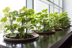 Giardino in costruzione Immagini Stock Libere da Diritti