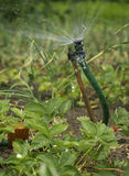 Giardino d'innaffiatura dello spruzzatore di irrigazione Fotografia Stock Libera da Diritti