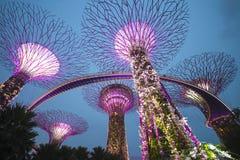 Giardino dalla baia, SINGAPORE 11 ottobre 2015: scena crepuscolare del supertree al giardino dalla baia Fotografia Stock Libera da Diritti