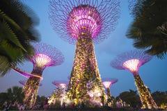 Giardino dalla baia, SINGAPORE 11 ottobre 2015: scena crepuscolare del supertree al giardino dalla baia Fotografie Stock Libere da Diritti