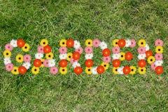 Giardino dalla natura della fienarola dei prati della molla del fiore dei fiori Immagini Stock