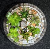 Giardino decorativo della pianta del piano d'appoggio Fotografia Stock Libera da Diritti
