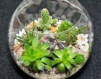 Giardino decorativo della pianta del piano d'appoggio Fotografia Stock