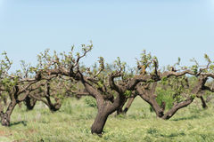 Giardino degli alberi Fotografie Stock